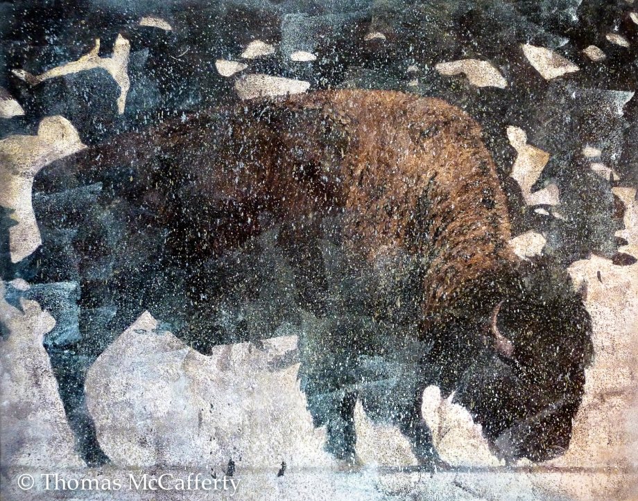 Bison alone (1 of 1)