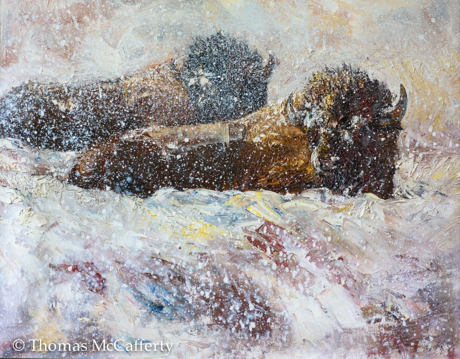 Bison in snow (1 of 1)